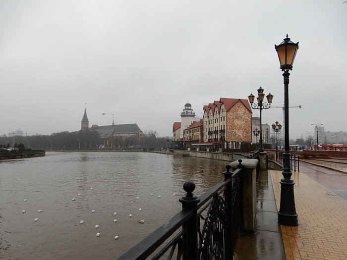 Kaliningrad and some Black-headed Gulls, with Königsberg Cathedral shrouded in mist.