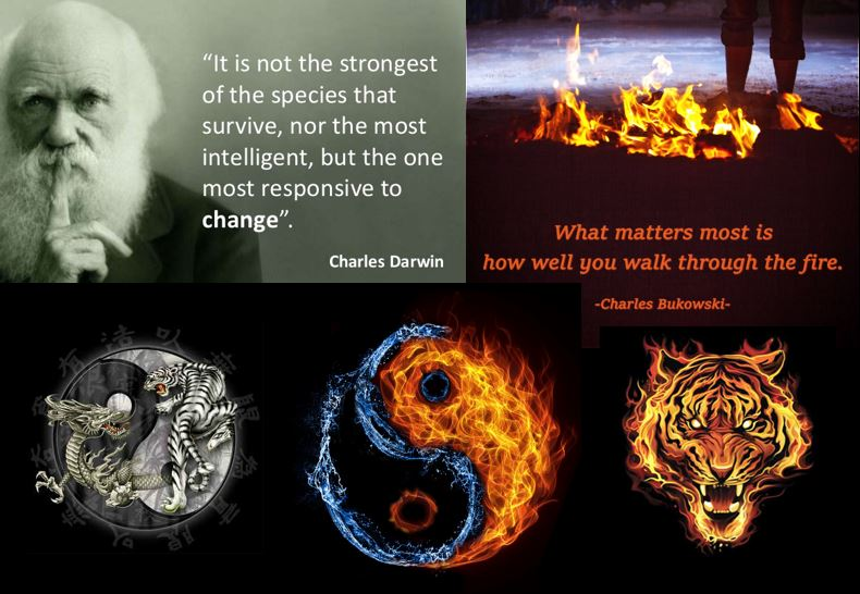 """What matters most is how well you walk through the fire.""      - Charles Bukowski      ""Once we leave our comfort zones is when the magic sparks of progress ignite. We must understand that the scorching heat of adversity is not your enemy. Pain, fatigue, hunger, stress and uncertainty is Nature's tool for refinement. Its purpose is to make you a better version of yourself. A mild form of ""Survival of the Fittest'. And for that, a price must be paid. Remind yourself of this when your feeling the burning pressure and resistance of difficult   training,   dieting, creating art or starting a new business. I do so everyday.""  - Mike Q"
