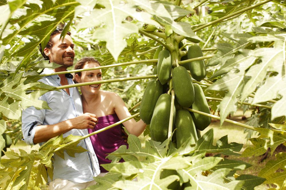 Plantation_3396.jpg