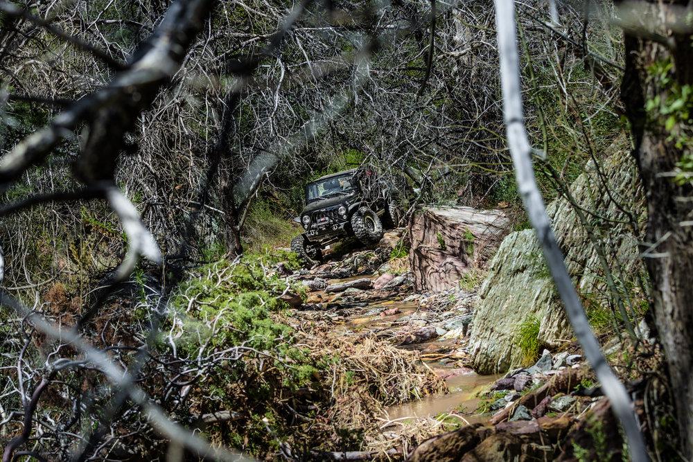 Editorial | Jeep Safari