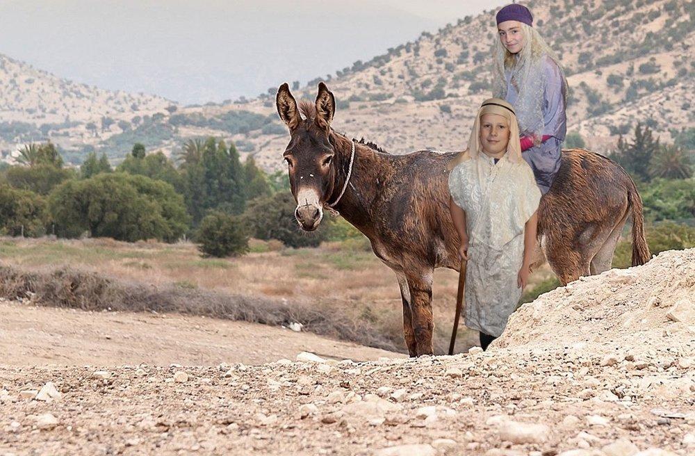 Donkey.001.jpeg