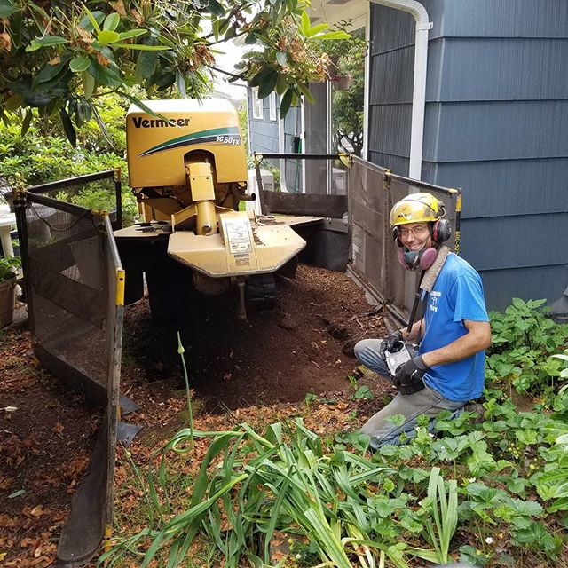 Getting the stump grinder to even hard to reach places is no problem.  Stay cool out there today, it's supposed to be a hot week.  #bamboo #bamboooregon #oregonbamboo #stumpgrinding #landscaping #albanyoregon #corvallisoregon #corvallis #oregon #pnw
