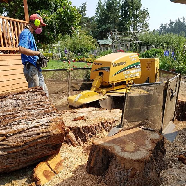 Grinding stumps earlier this summer.  #bamboo #bamboooregon #oregonbamboo #stumpgrinding #landscaping #albanyoregon #corvallisoregon #corvallis #oregon #pnw