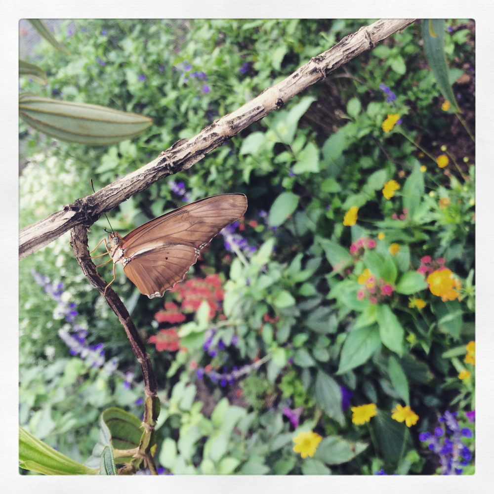 Butterfly at Disney World March 2015 photo credit Kirsten Akens 2015