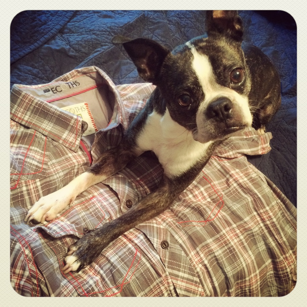Ecoths shirt with Boston terrier credit Kirsten Akens 2015