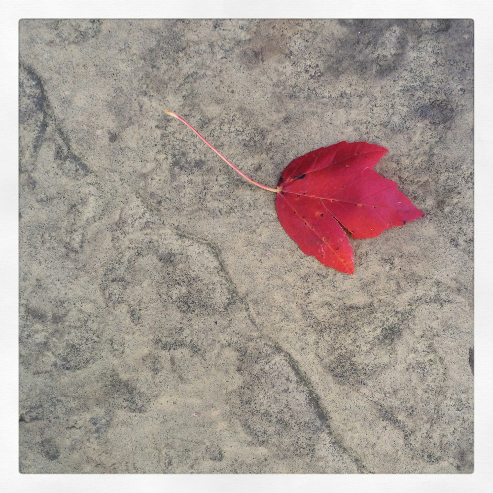 Red leaf, photo credit Kirsten Akens 2015