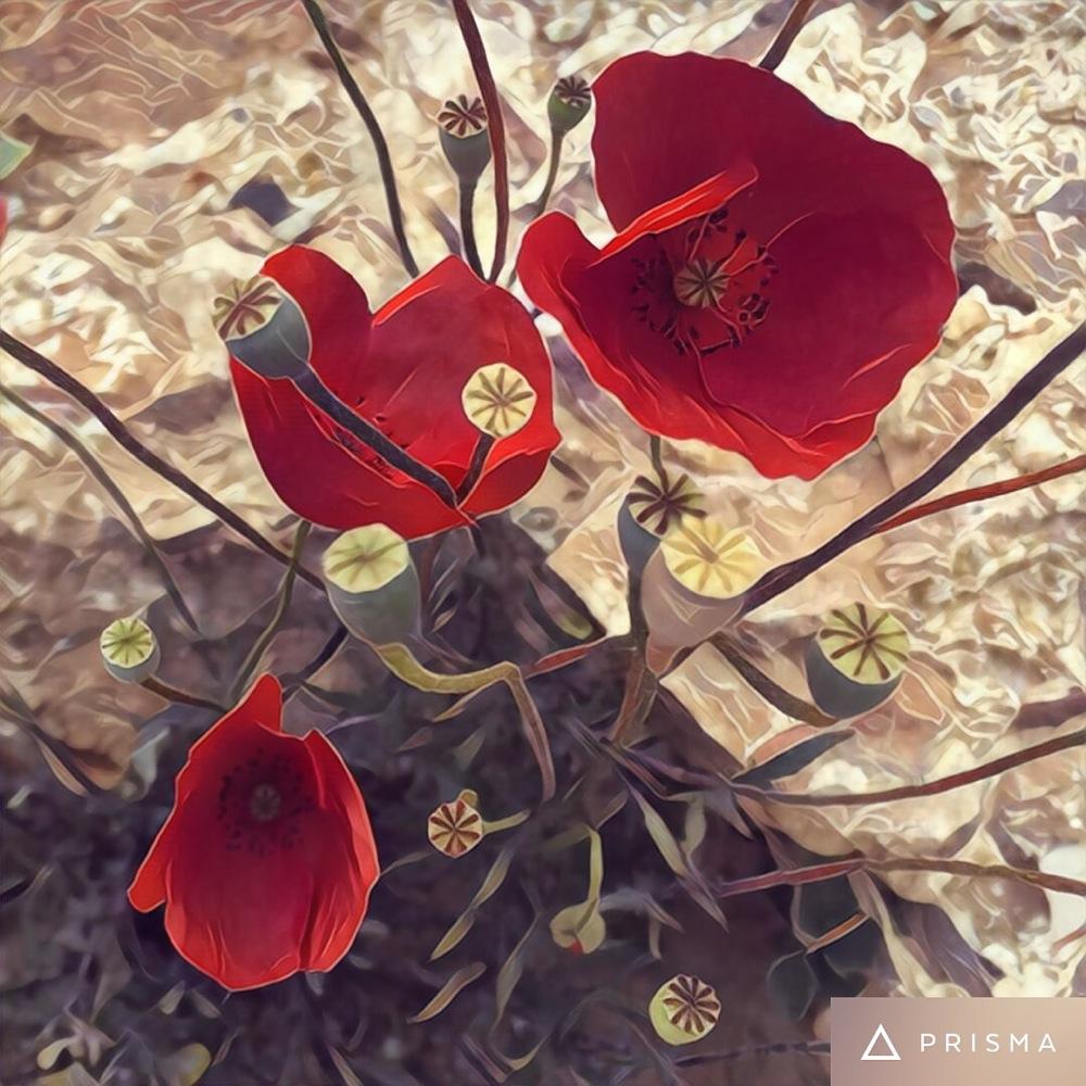 Flowers, credit Kirsten Akens 2016
