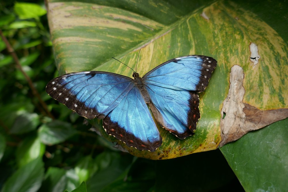 butterfly-2648489_1920.jpg