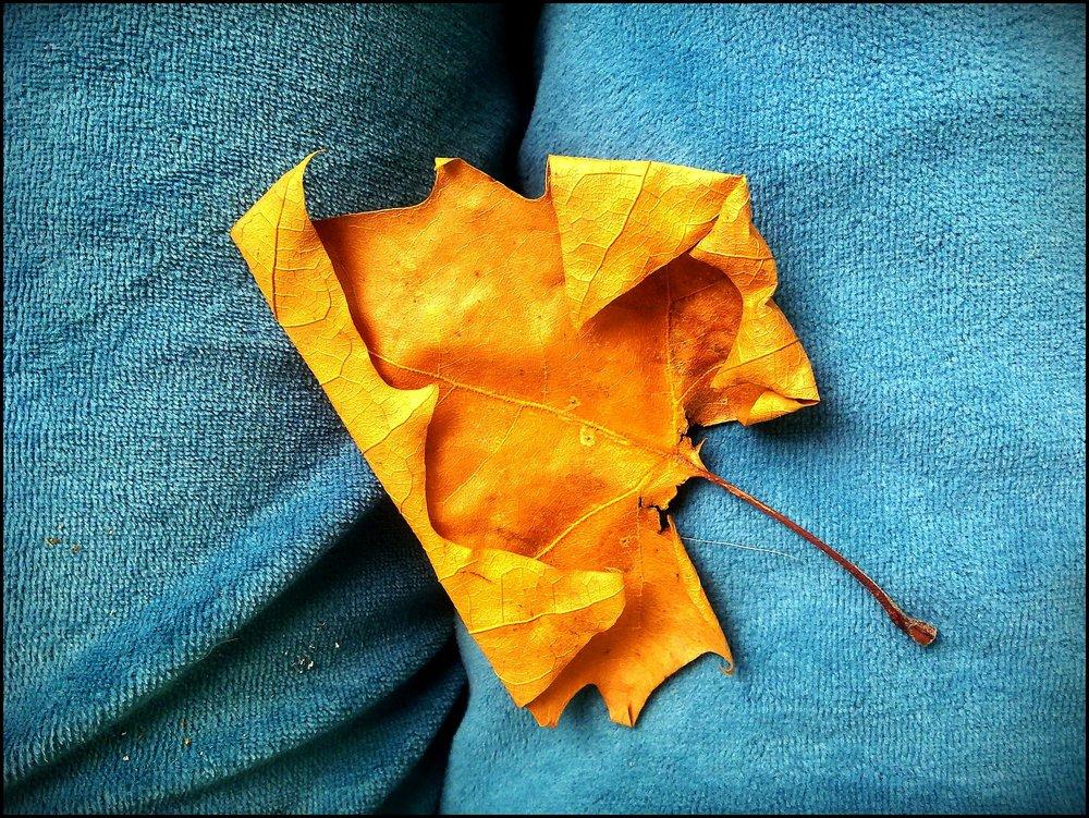 autumn-195406_1920.jpg