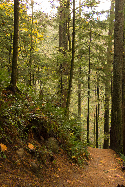 Trail to Zen