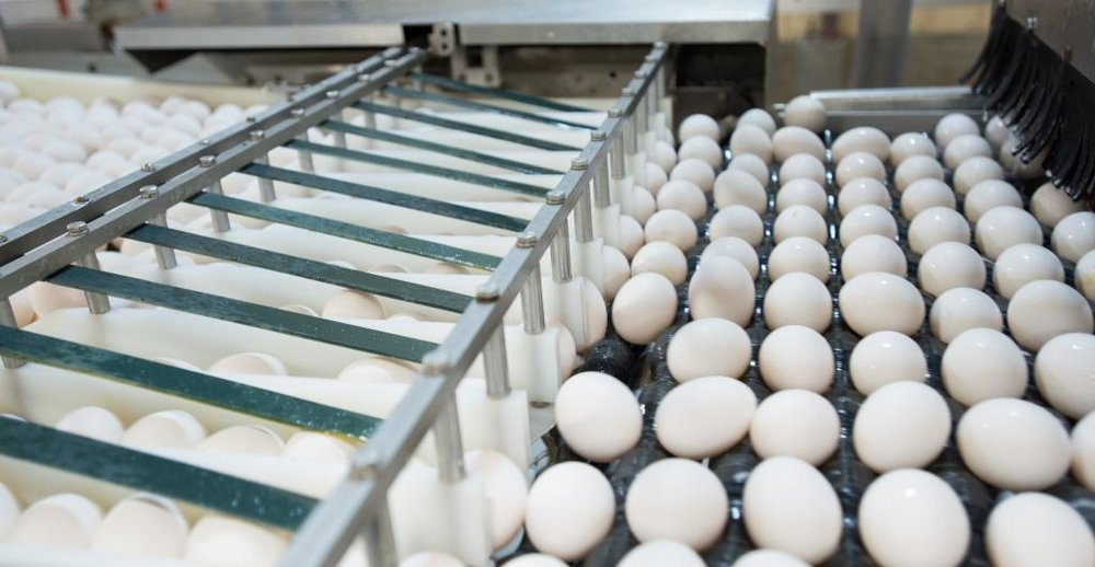 Iowa egg farmers produce nearly 16 billion eggs each year.