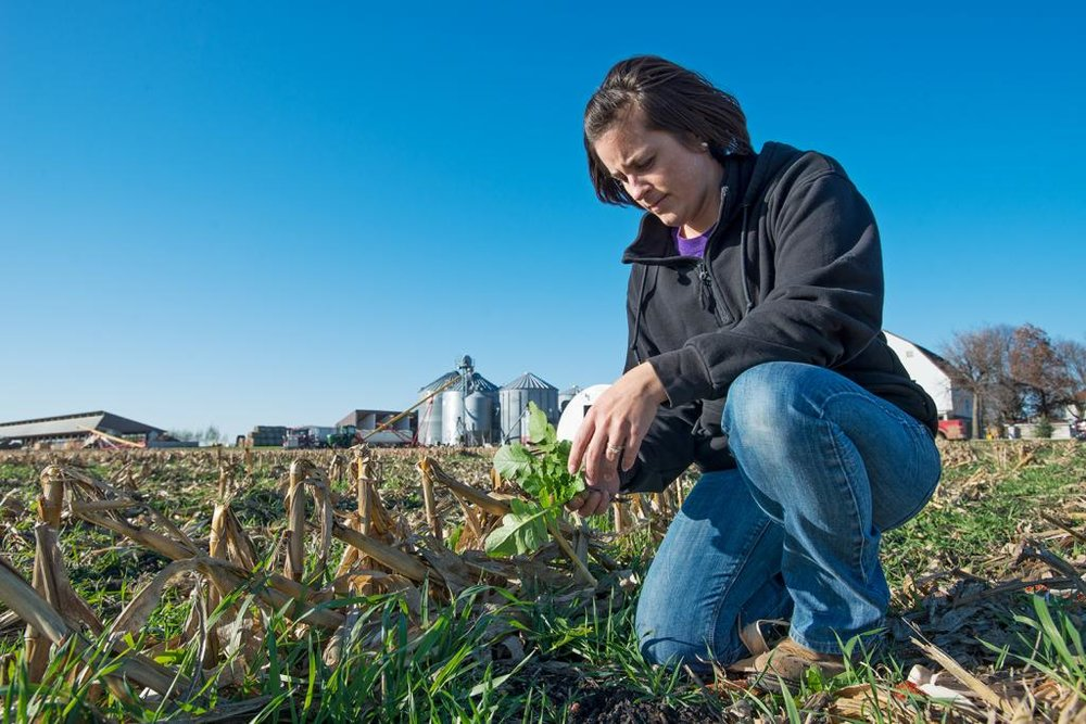 Kellie Blair, a Dayton area farmer, examines cover crop vegetation in a no-till field. The Blairs and many other farmers have adopted no-till practices and have planted cover crops to keep soil and nutrients in place.