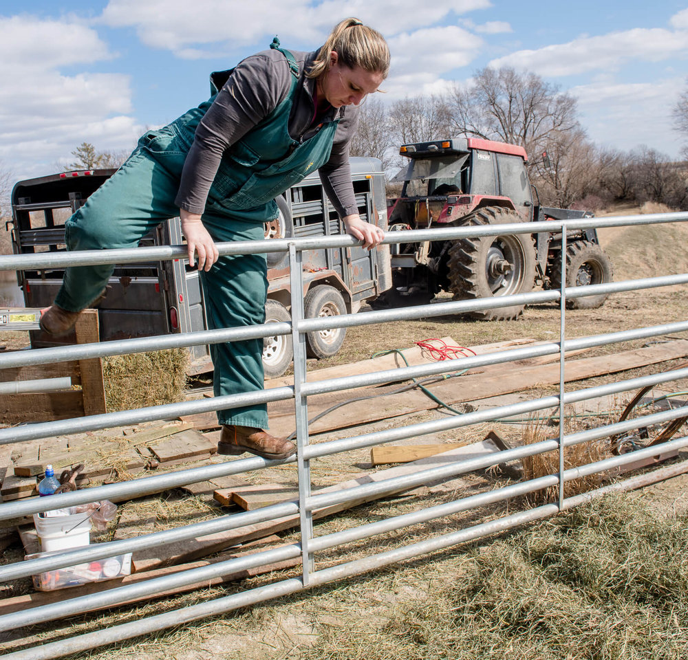 Katie Lang climbs a gate while helping livestock at an area farm. Veterinarians often face strenuous physical conditions while providing care.