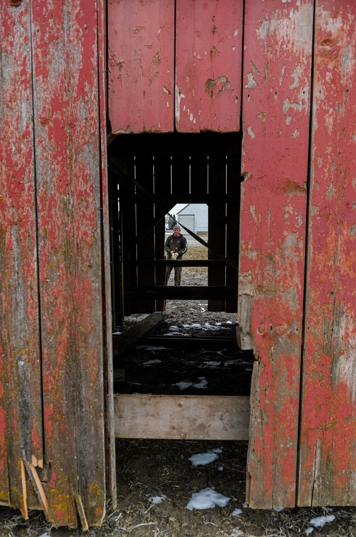 Randy Schmidt watches the progress through a door of the barn.