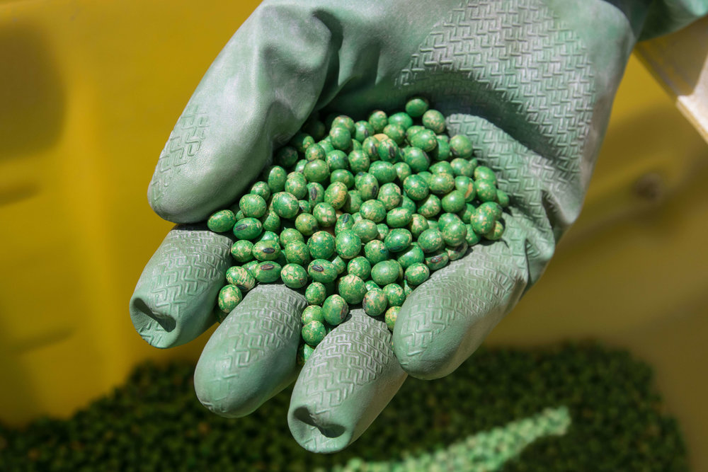 The seeds are green because they're coated with seed treatments. Seed treatments have been a big revolution in agriculture because they reduce the amount of crop protection products required to grow a healthy crop