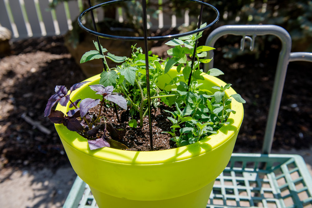 Container gardening is a great way to dip your toe into gardening and growing your own produce.