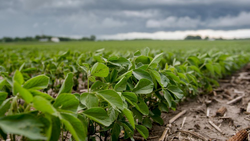 Iowa is second in soybean production, one of the exports targeted in China's 25 percent tariff. Photo credit: Joseph L. Murphy