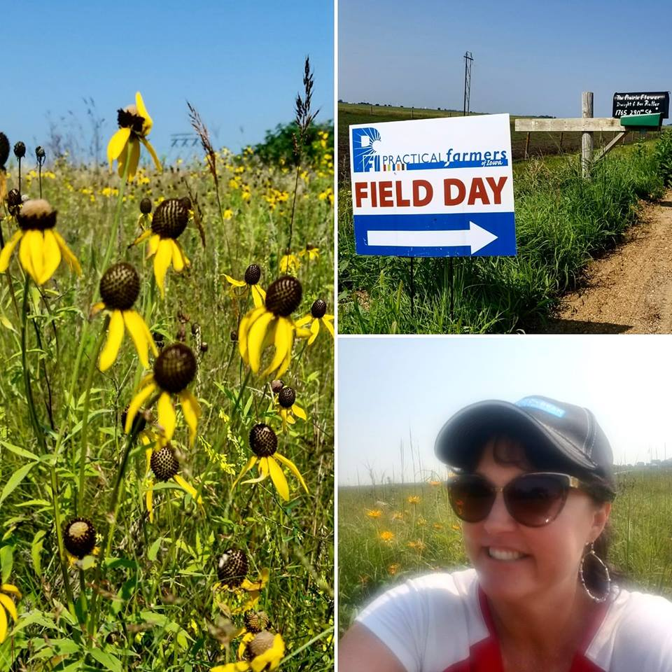 Prairie plantings can help improve soil and attract pollinators. Photo credit: Darcy Maulsby