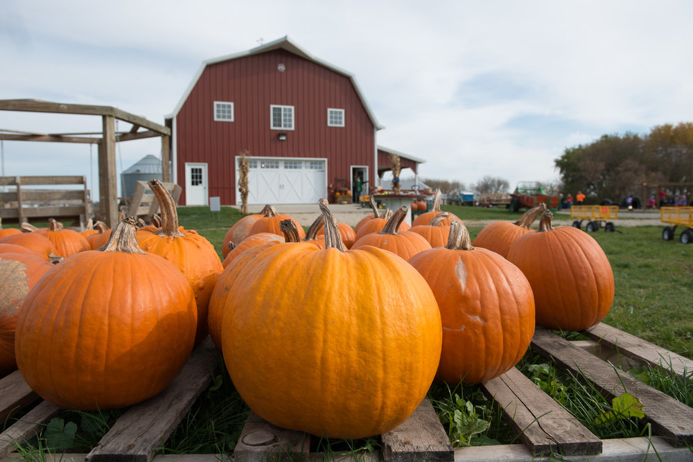 Beyond fun activities, you can find your fall pumpkin at Enchanted Acres. Photo credit: Joseph L. Murphy/Iowa Soybean Association
