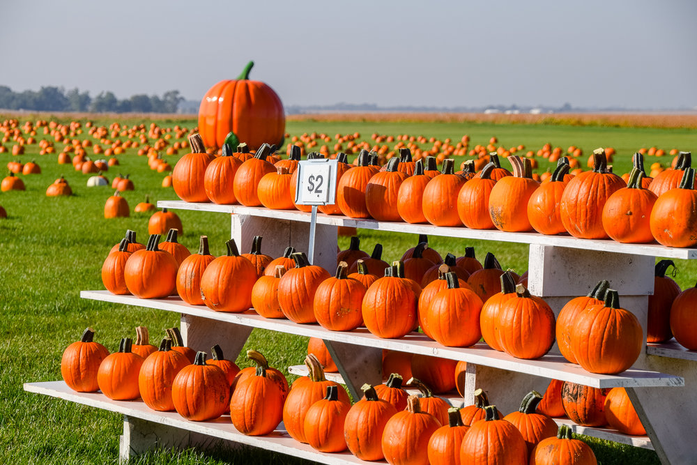Visit the Geisler Farms pumpkin patch and corn maze this fall. Photo credit: Joseph L. Murphy/Iowa Soybean Association