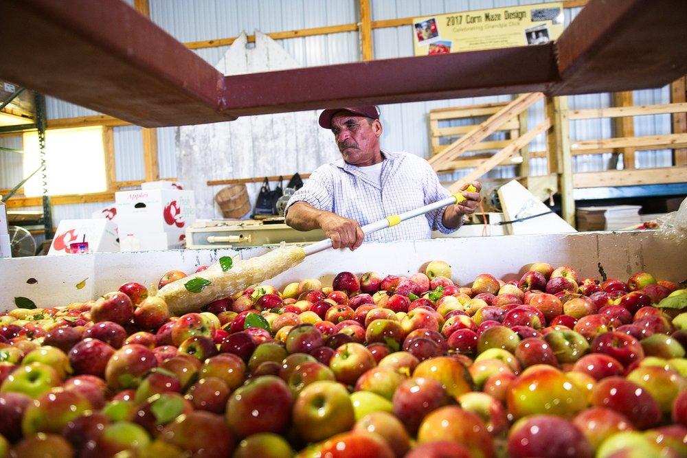 Apples are washed before they are packaged. Photo credit: Joseph L. Murphy/Iowa Soybean Association