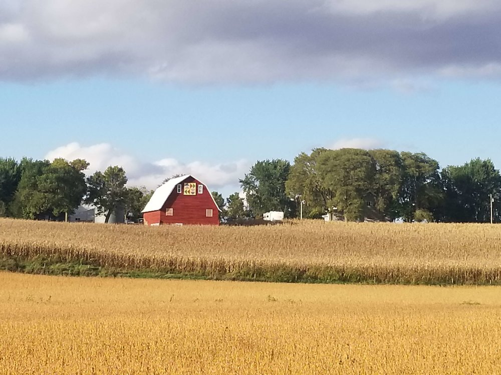 An soybean fields and an iconic-looking Iowa barn near Wall Lake in Sac County. Photo credit: Darcy Dougherty Maulsby