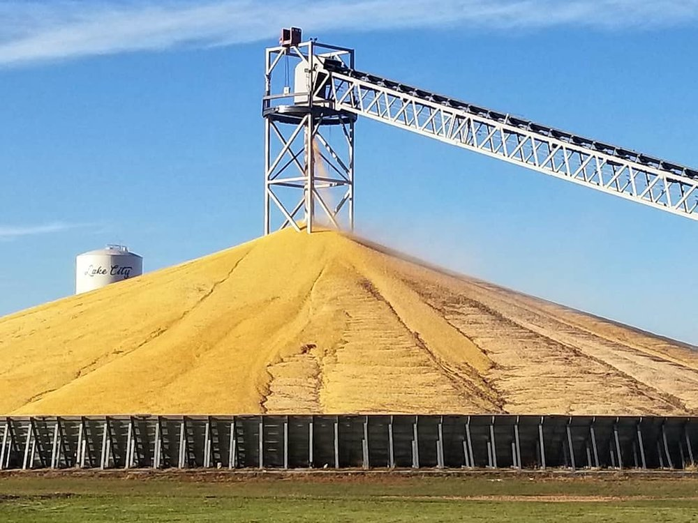 "The ""corn mountain"" at the co-op in Lake City on Oct. 28. Photo credit: Darcy Dougherty Maulsby"