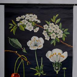 Jung Koch Quentell Botanical Poster+256x256px.jpg