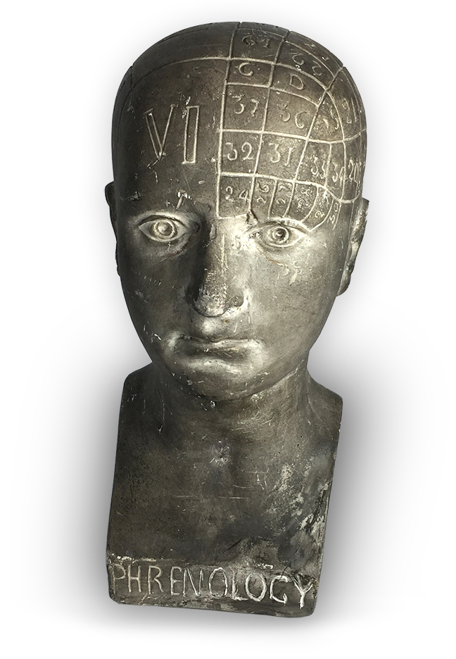 19th Century Phrenology Head.jpg