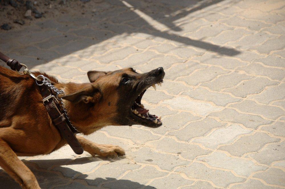 900215_1920_L_Dog_attack_angry_Bite_rage.jpg