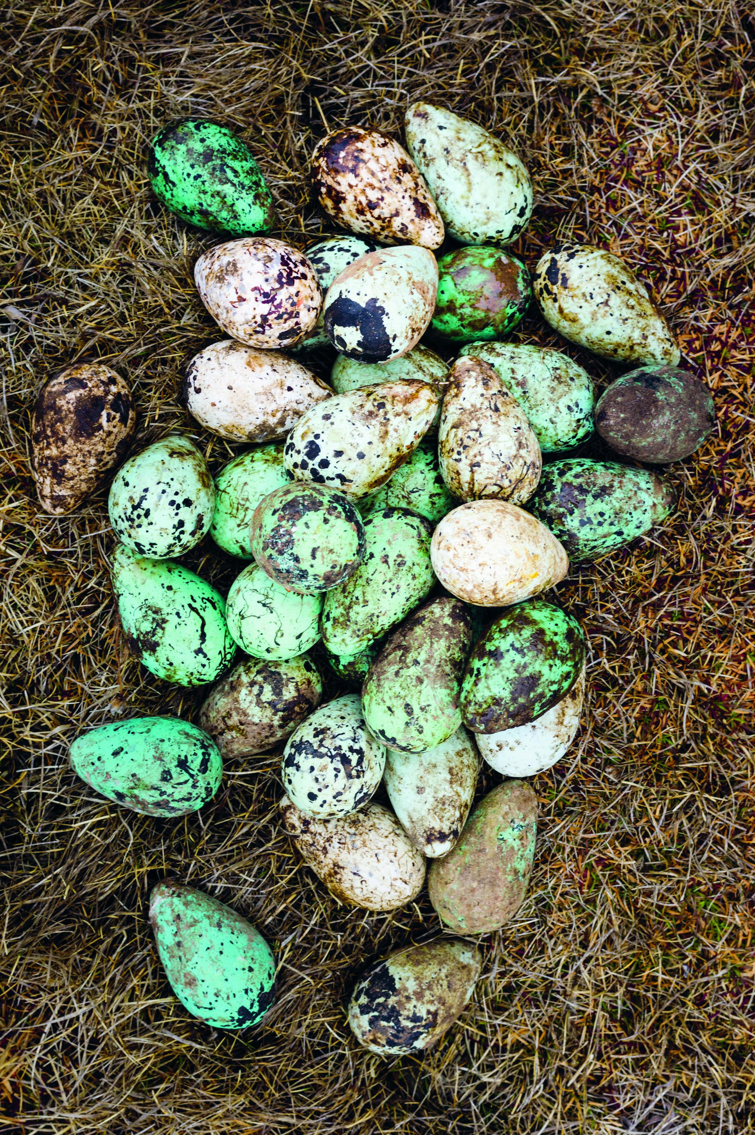 nordic eggs