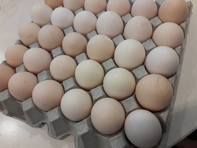 Eggs!  30 free range eggs for $10 at the Wesley Market! Bargain!