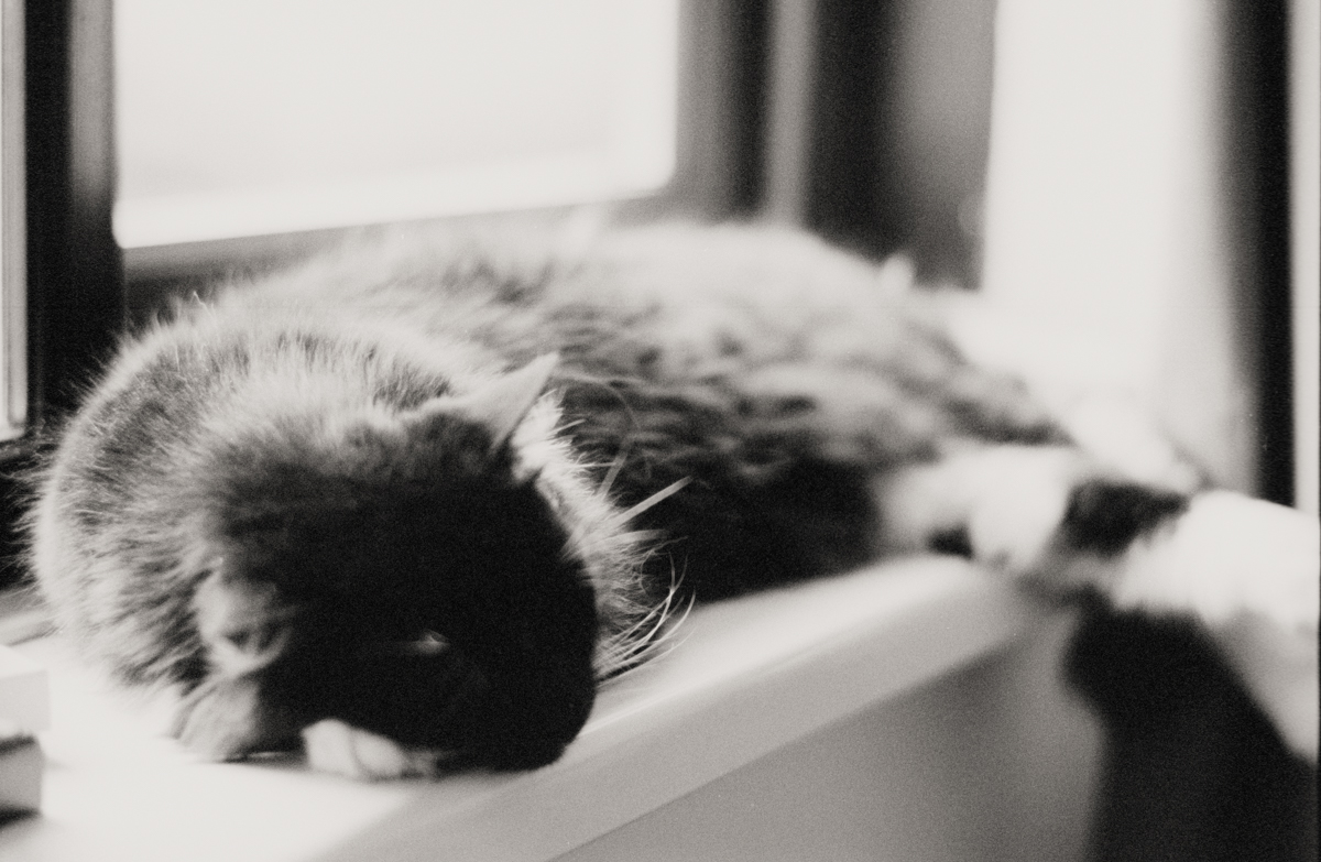I tried creeping upon Muffy for a sneaky photo, but the Damned cat moved. Fuji ACROS 100 in Adox FX-39.