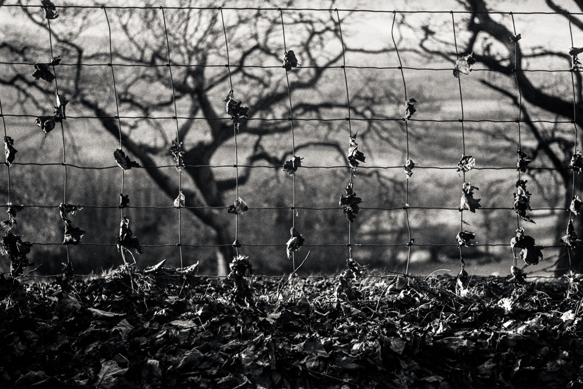 Leaves on wire, near Trelleck, Chepstow.