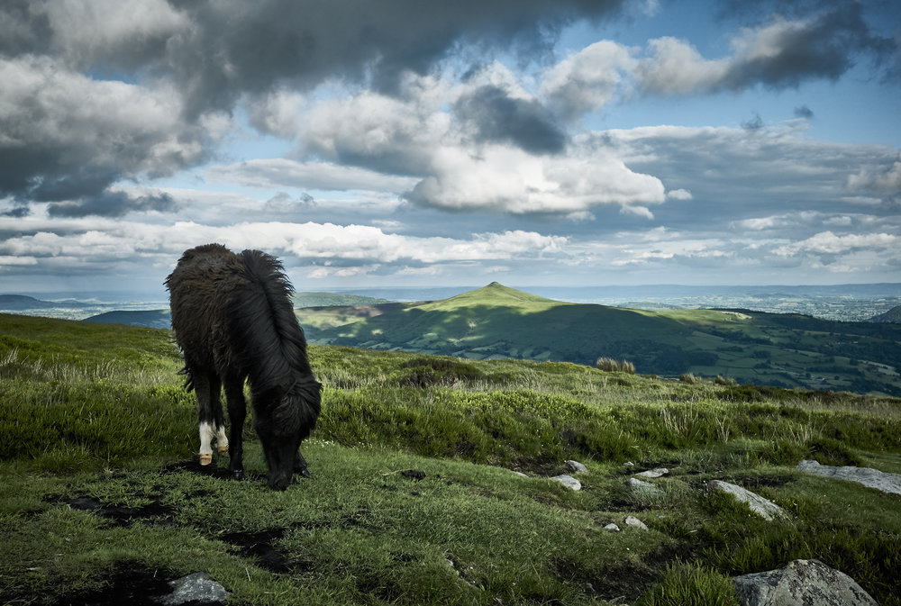 Leica M8. Wild Horse on Pen Cerrig Calch.