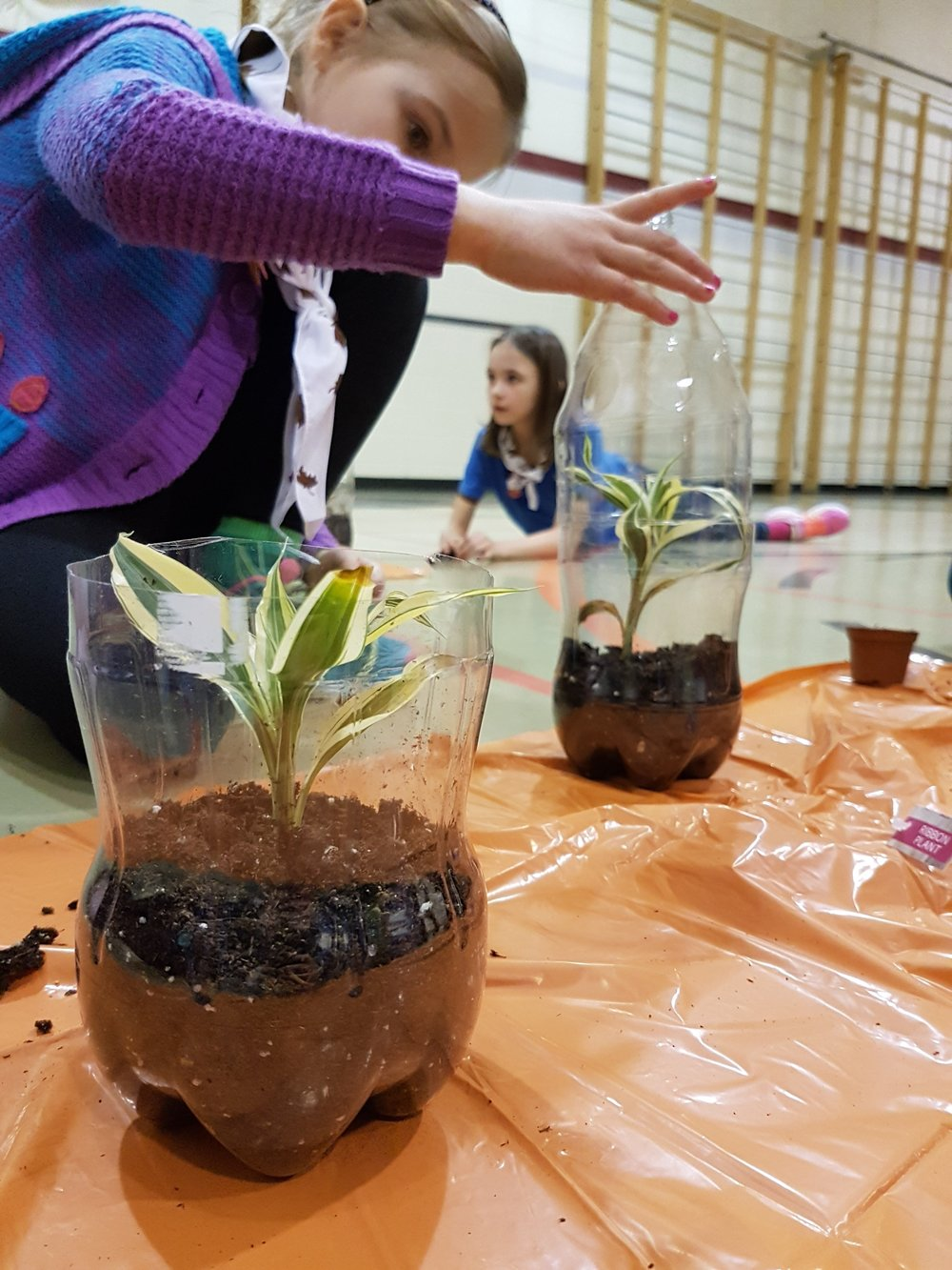 saskatoon brownies making terrariams