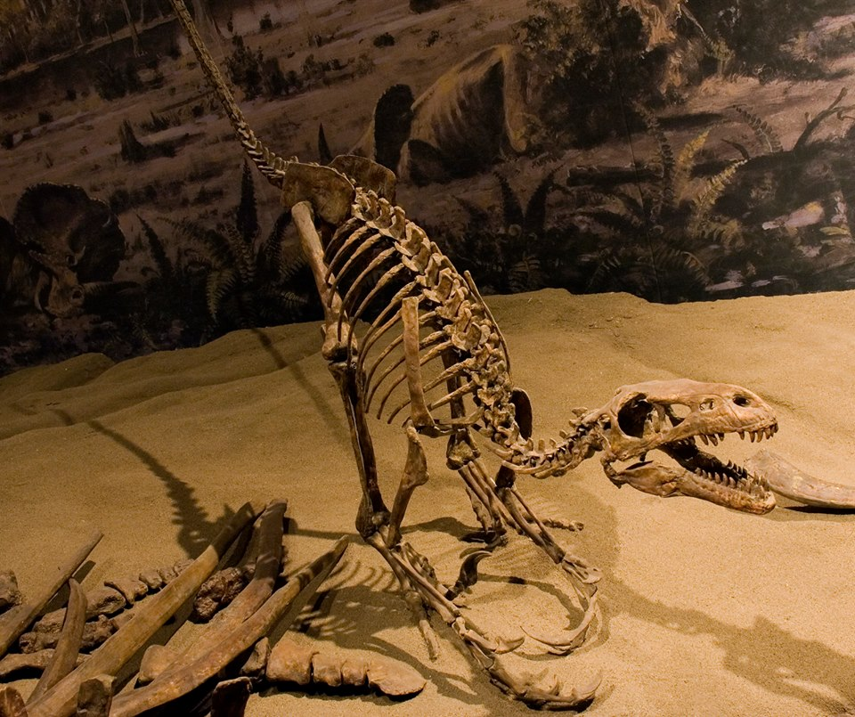 royal tyrell dinosaur museum review.jpg