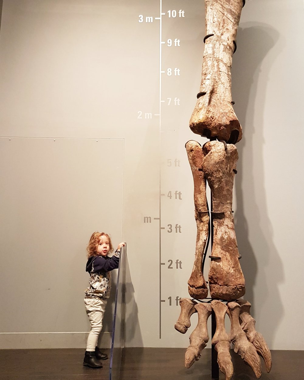 royal tyrell museum review with toddler.jpg