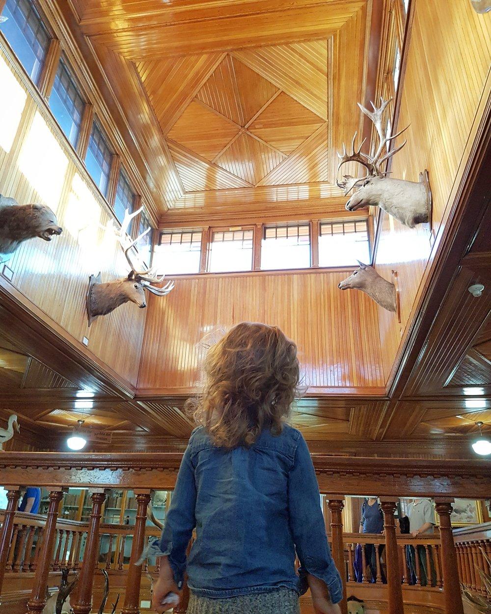 banff museum review 2.jpg