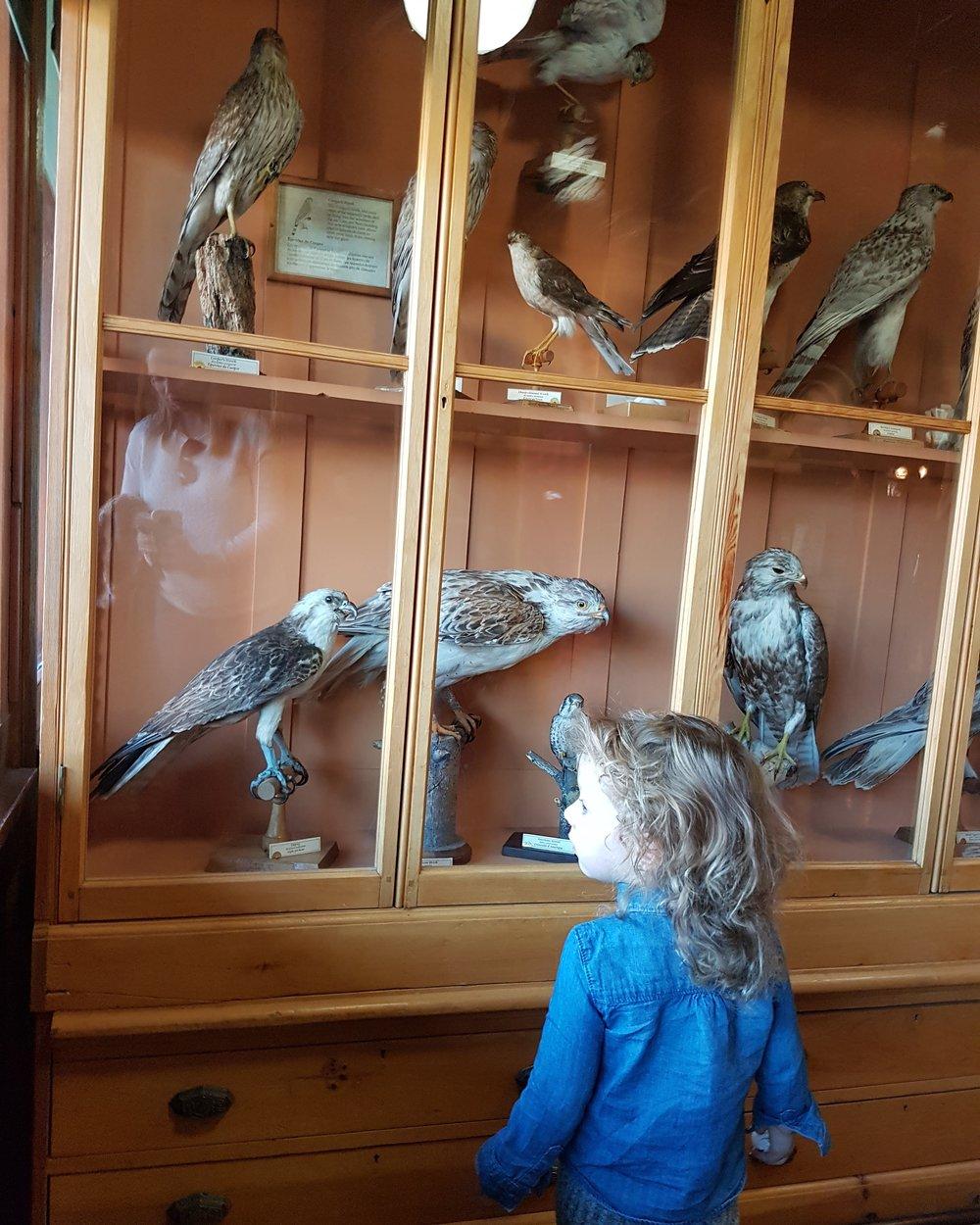banff museum review.jpg