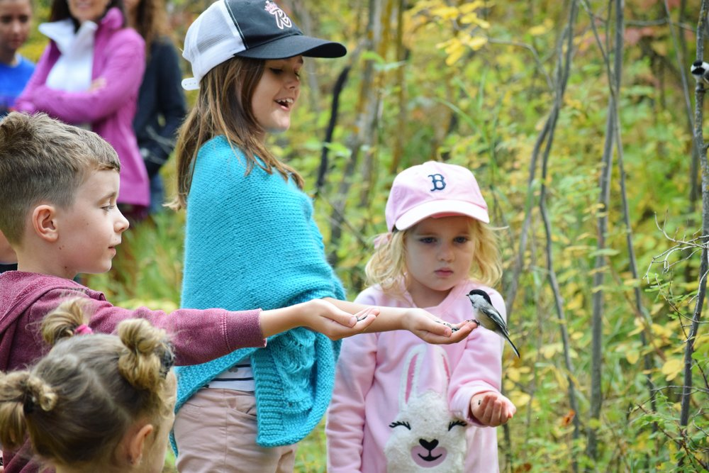 biopilia and why children developmentally need nature