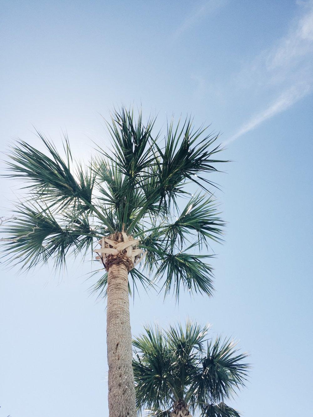 s-space-palm.JPG
