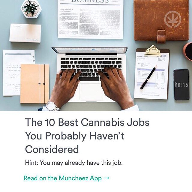 📲Have you checked out our culture section featured on @muncheezapp? Discover the 10 best jobs in the cannabis industry!😴Download Muncheez today! Link in bio. 🌱🙂✌🏽 #news #culture #muncheez