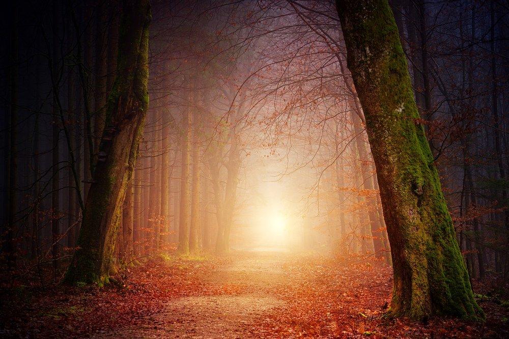 nature-3151869_1280.jpg