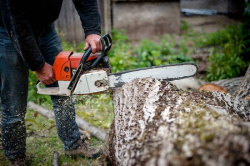 depositphotos_46383873-stock-photo-man-cutting-trees-using-an.jpg