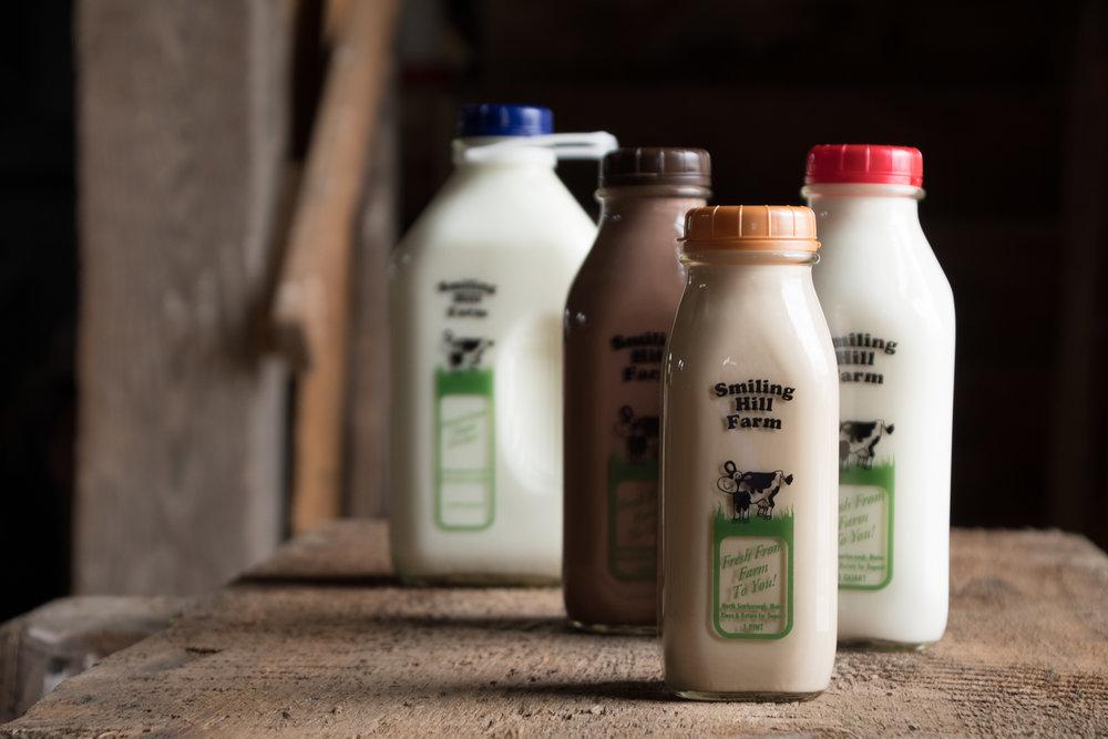 Dairy - milk - cheese - butter - yogurt