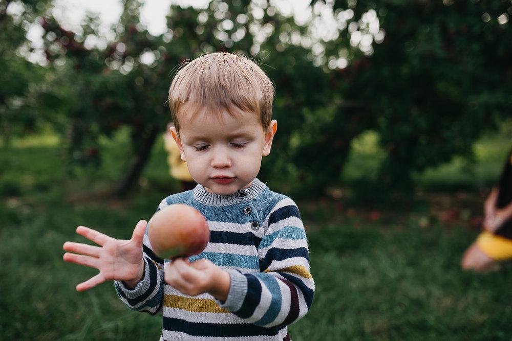Poirier.orchard.comp--4.jpg