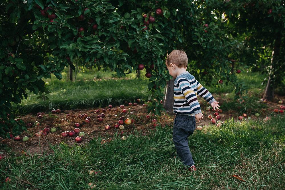 Poirier.orchard.comp--109.jpg