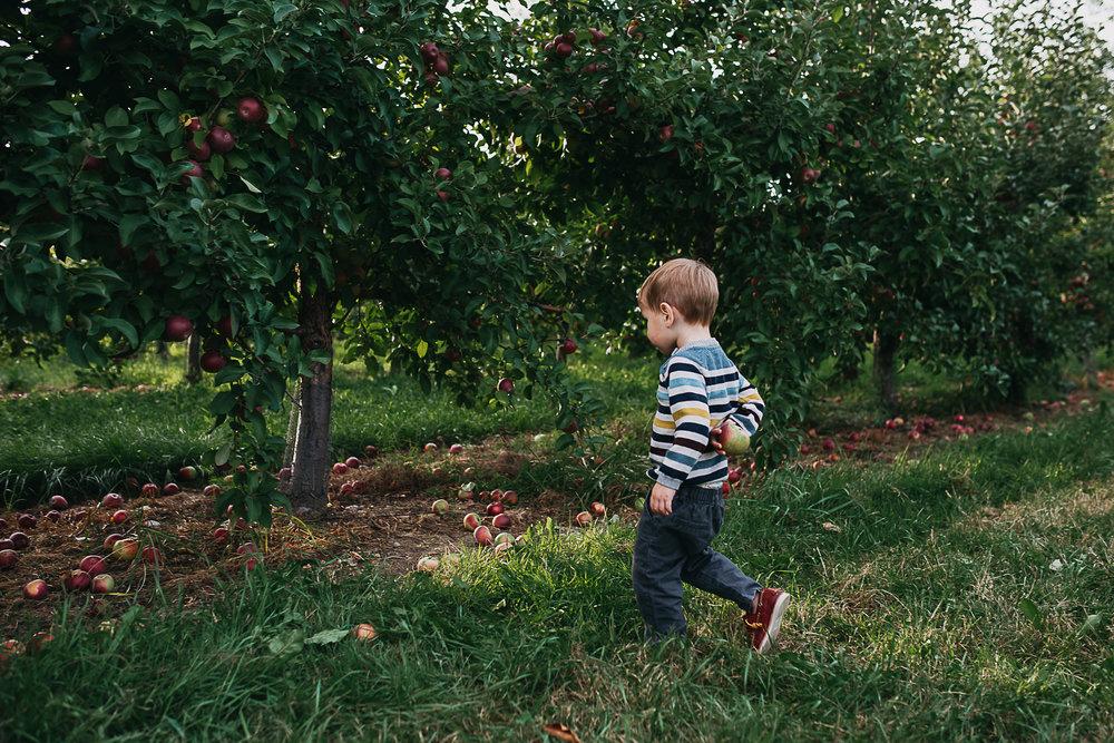 Poirier.orchard.comp--111.jpg