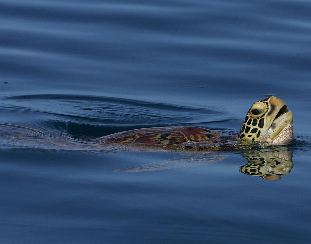 turtle_orig.jpg